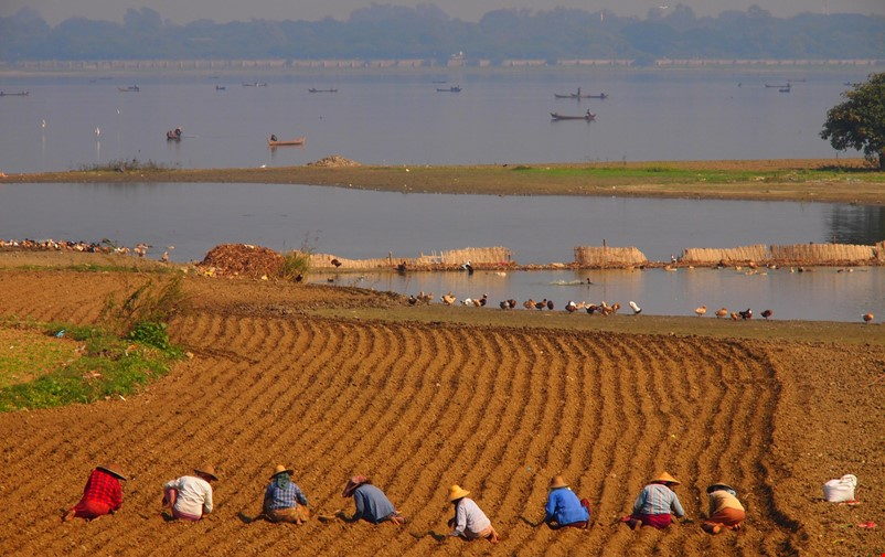 People working on paddy field.